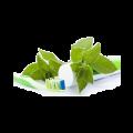 Organic Toothpaste